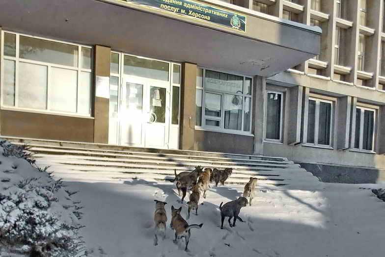Собаки 111