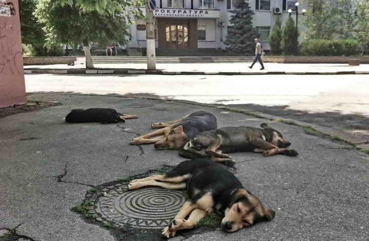 Собаки 4