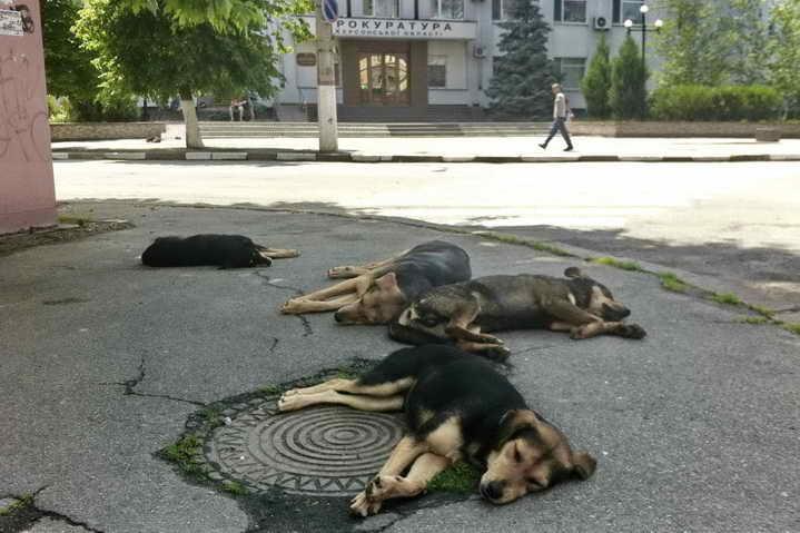 Собаки пр